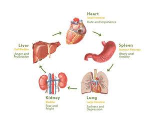 emozioni e organi